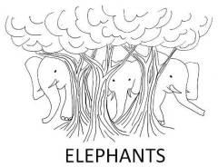 ELEPHANTS for web